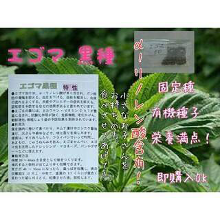 エゴマ 黒種 固定種 野菜の種 ハーブの種 水耕栽培 家庭菜園 スーパーフード(野菜)