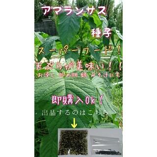 アマランサス 自家採種 家庭菜園 野菜の種 水耕栽培 スーパーフード(野菜)