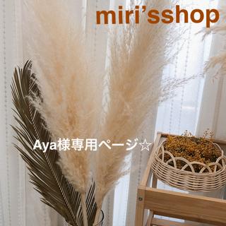 パンパスグラス Aya様専用ページ(ドライフラワー)