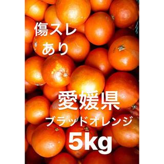 愛媛県 ブラッドオレンジ 5kg(フルーツ)