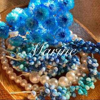 夏花材 ソルゴ イモーテル  ブルーグラデーション ハーバリウム花材(ドライフラワー)