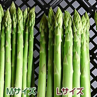 アスパラ 1kg アスパラガス 採りたて野菜(野菜)