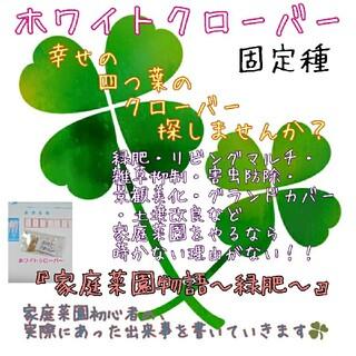 ホワイトクローバー 『フィア』 緑肥 雑草抑制 害虫防除 野菜の種 景観美化(野菜)