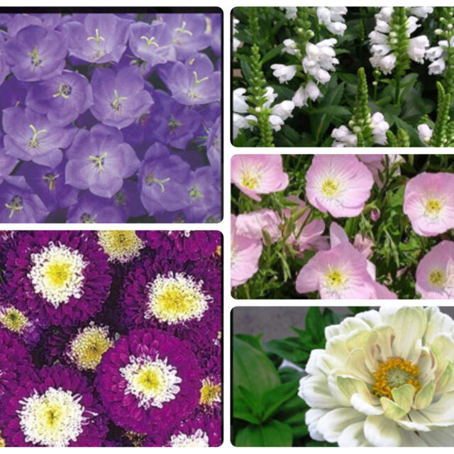 ぺこりん様専用花種5種セット ハンドメイドのフラワー/ガーデン(その他)の商品写真