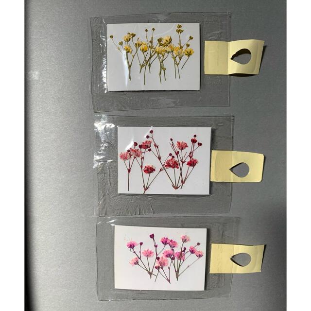 押し花 イエロー・レッド・ピンク ハンドメイドのフラワー/ガーデン(ドライフラワー)の商品写真