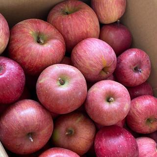 減農薬栽培山形産 雪むろ りんご 小〜小中玉ミックス少しだけ色浅め5キロバラ詰め(フルーツ)