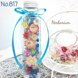 ハーバリウム No.817、No.809 おまとめ(その他)