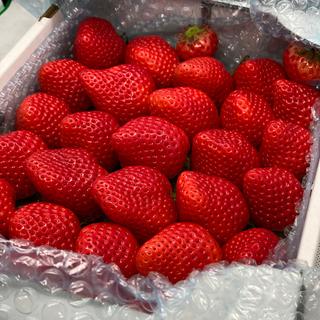 さかもとさん様専用●さがほのか2kg●苺イチゴ(フルーツ)