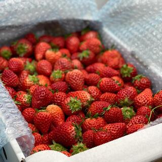 ジャム用いちごさん4kg●苺イチゴ(フルーツ)
