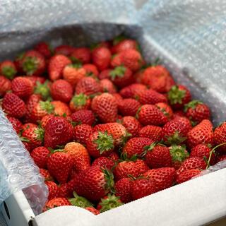 ジャム用さがほのか4kg●いちご苺イチゴ(フルーツ)