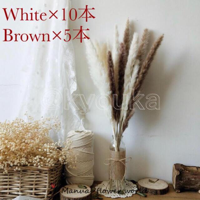 パンパスグラス 白10本 茶色5本 セットドライフラワー テールリード ハンドメイドのフラワー/ガーデン(ドライフラワー)の商品写真