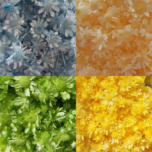 スターフラワーミニ8色 お試しヘッドのみ55個+おまけ ハンドメイドのフラワー/ガーデン(ドライフラワー)の商品写真