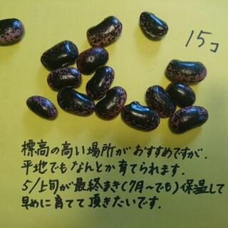 花豆 (野菜)