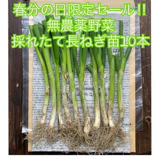 ✨限定セール✨根っこ&土付きねぎ苗*10本*無農薬野菜*初心者向き*プランター*(野菜)