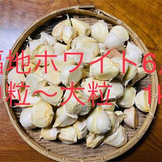 訳有 青森県産 福地ホワイト6片中粒〜大粒 生ニンニク1kg にんにく (野菜)