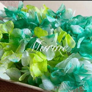 ソフトゆめ紫陽花 グリーングラデーション ラメ付き ハーバリウム花材(プリザーブドフラワー)