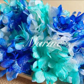 ソフトゆめ紫陽花 マリンブルー ラメ付き ハーバリウム花材(プリザーブドフラワー)