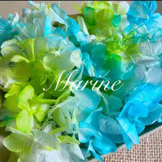 ソフトゆめ紫陽花 ハワイアングリーン ラメ付き ハーバリウム花材(プリザーブドフラワー)