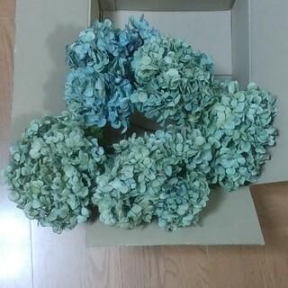 【オレオ様確認用】アジサイドライフラワー 青緑~緑青 大中 茎有5(ドライフラワー)