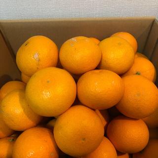 和歌山県産の有田清見オレンジ(5キロ)(フルーツ)