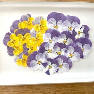 【押し花】 ビオラ 20枚 ✳︎お値下げしました✳︎(ドライフラワー)
