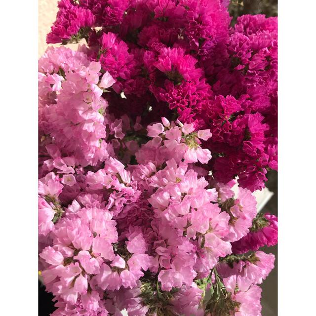スターチス ドライフラワー❣️ピンク系 ハンドメイドのフラワー/ガーデン(ドライフラワー)の商品写真