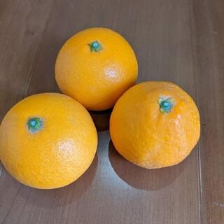 清見オレンジ10キロ(フルーツ)