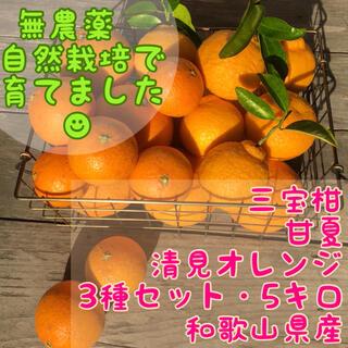 春香る旬の柑橘☆食べ比べ3種セット☆無農薬自然栽培☆5キロ(フルーツ)