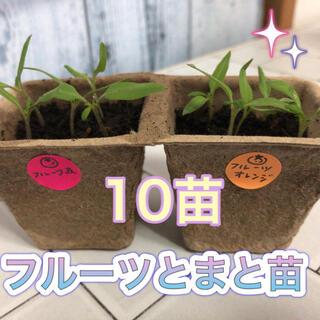 無農薬 フルーツトマト苗 赤5本 オレンジ5本(野菜)