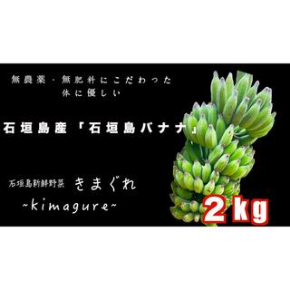 無農薬・無肥料!最高級「石垣島バナナ」2kg(フルーツ)