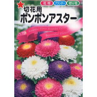 アスター 紫 白 ピンク (桃) 八重咲き 30粒混合去年取れた種 エゾギク(その他)