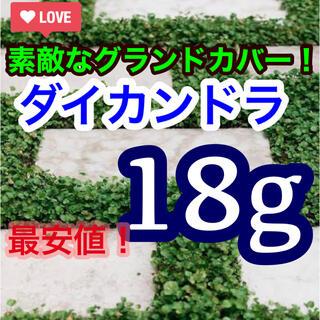 【まき時】【最安値】ダイカンドラ ディコンドラ 36g種子。お試しサイズ!(その他)