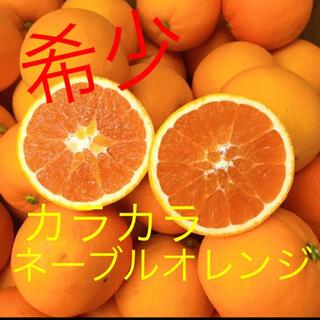 ☆希少☆ 愛媛県産 カラカラネーブルオレンジ(フルーツ)