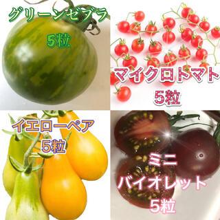 希少トマト種グリーンゼブラ マイクロトマト イエローペア ミニバイオレット(その他)