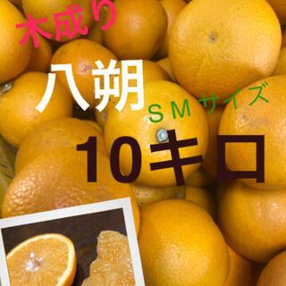 和歌山県産有田の木成り八朔SM10キロ(フルーツ)