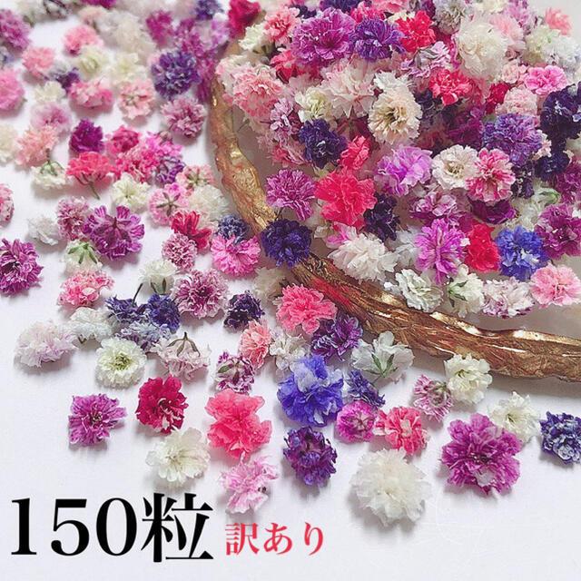 同梱250円 かすみ草 ドライフラワー 訳ありパープル系150粒 ハンドメイドのフラワー/ガーデン(ドライフラワー)の商品写真