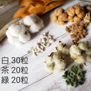 綿の実 種 コットン種 綿花 白&茶&緑 3色 70粒(ドライフラワー)