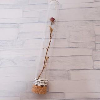 ザラホーム(ZARA HOME)の韓国 インテリア バラ ドライフラワー 置物 zara home(ドライフラワー)