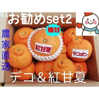 お勧め旬果物Set.2❗デコちゃん&紅甘夏♥雪だるま(フルーツ)