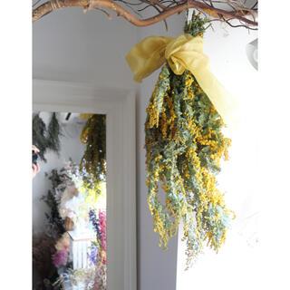 mimosa ミモザのドライフラワースワッグ(ドライフラワー)