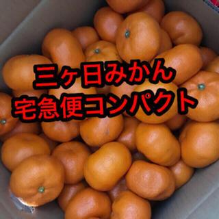 青島みかん(フルーツ)