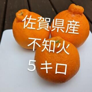 不知火5キロ(フルーツ)