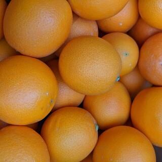 ネーブルオレンジ5キロ(フルーツ)