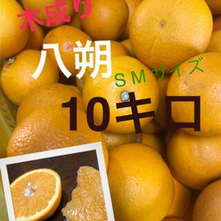 和歌山県産 有田の木成り八朔SM10キロ(フルーツ)