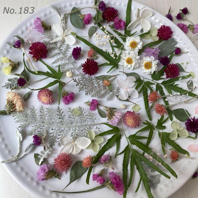 No.183  ドライフラワー プリザーブドフラワー 花材 素材 ハンドメイド ハンドメイドのフラワー/ガーデン(ドライフラワー)の商品写真
