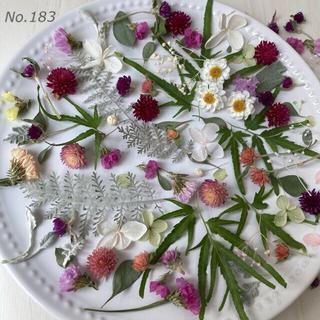 No.183  ドライフラワー プリザーブドフラワー 花材 素材 ハンドメイド(ドライフラワー)
