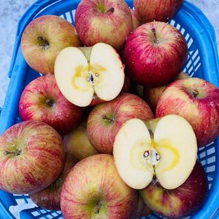 青森りんご5キロオマケ付き 家庭用葉取らずサンフジ(フルーツ)