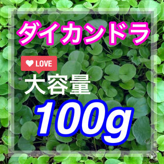 【まき時】【最安値】ダイカンドラ ディコンドラ 100g種子。《7平米》芝生へ(その他)