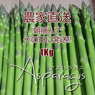太アスパラ 1kg アスパラガス 採りたて野菜(野菜)