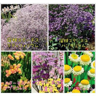 お花の種セット 6種類(その他)